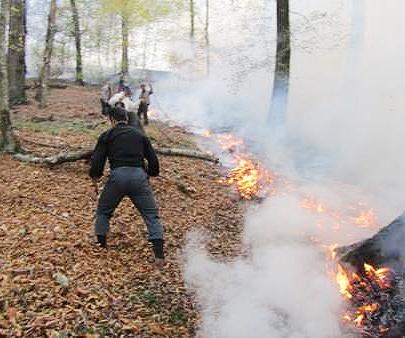 جنگل های نور مازندران دوباره شعله ور شد