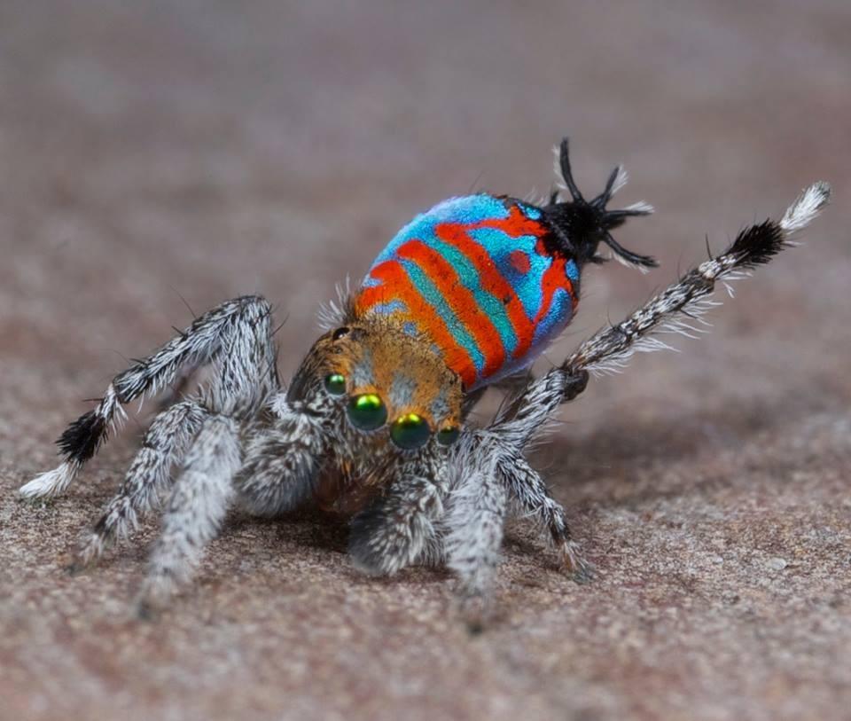 آشنایی با عجیبترین حیوانات کشف شده در سال ۲۰۱۵