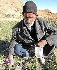 بازگشت ۱.۵ میلیون سالمند به کار   ۷۲ درصد در بخش کشاورزی