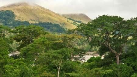 یک صد میلیون هکتار از جنگلهای آفریقا احیا میشود