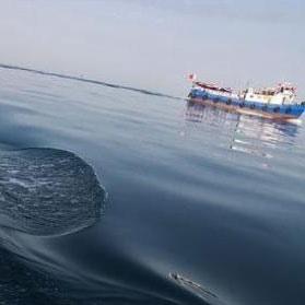 آب خلیج فارس در زمستان اسیدیتر است