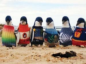 ژاکتبافی برای پنگوئنها