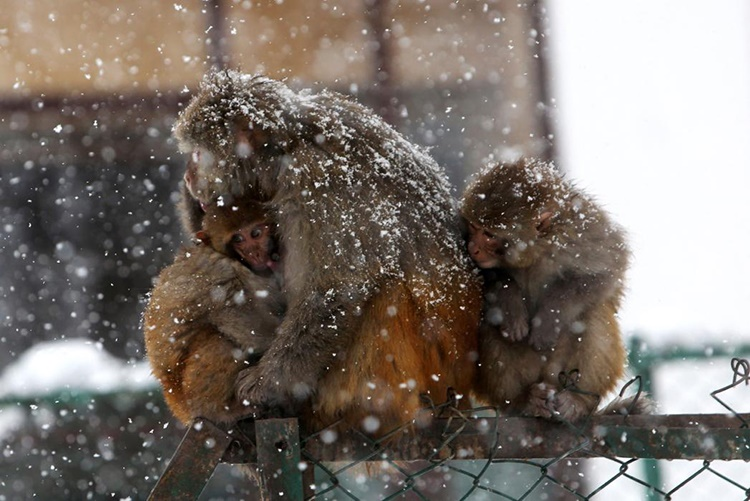 monkeys۲