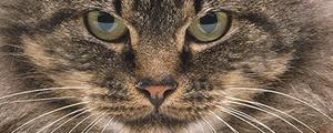 پیرترین گربه زنده جهان