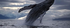 گورستان نهنگها کجاست؟