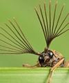 عکاسی ماکرو از حشرههای کوچک