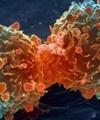 آمار سالانه مرگ و میر ایرانیها بر اثر سرطان