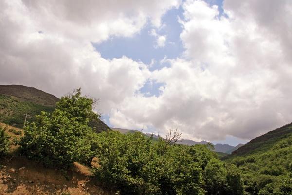 افزایش ۹درصدی تخلفات در عرصههای جنگلی و مرتعی