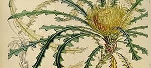 مجله آشنایی با خواص گیاهان