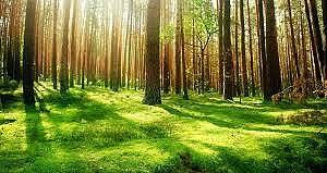 آشنایی با روز طبیعت