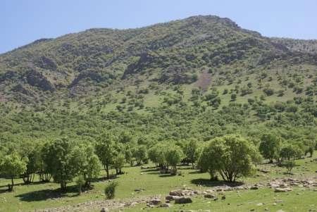 ارتفاع متوسط تودههای جنگلی زاگرس چهار متر کاهش یافته است