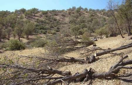 گستردگی ریزگردها با کاهش وسعت جنگلهای زاگرس افزایش یافت