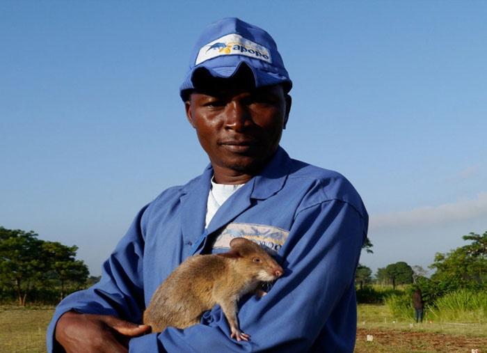 موشهای مینیاب