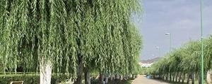آماده سازی بوستان ۵۰۰ هکتاری شرق تهران تا روز طبیعت