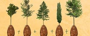 پس از مرگت درخت شو