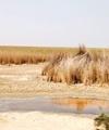 مخالفت سازمان حفاظت محیطزیست با نحوه فعالیت نفتی درتالاب هورالعظیم
