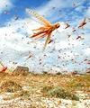 حشرهای که طوفان به پا  میکند