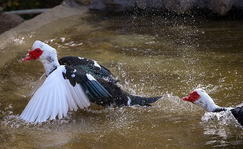 آشنایی با باغ پرندگان تهران