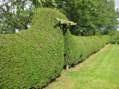 باغچه گیاهان دارویی در بوستانها ایجاد کنیم