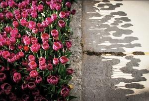جاودانگی گلهای بهاری در قاب دوربین