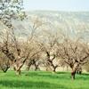 تداوم خشکسالی تا ۳۰سال دیگر