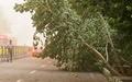 توفان در قزوین خسارات به بار آورد