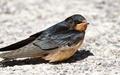 هیچ پرندهای در فوکوشیما آواز نمیخواند