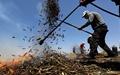 عکس روز: برشته کردن گندم سبز