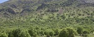 دستور رئیسجمهور برای توقف بهرهبرداری از جنگلها