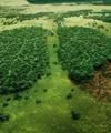 نجات زمین با نسل جدید فوتوسنتز مصنوعی