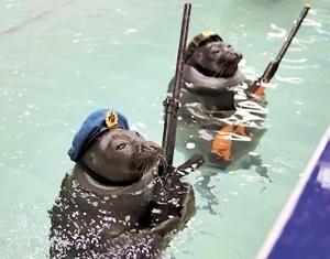 ارتشی از زیردریایی تا شیردریایی