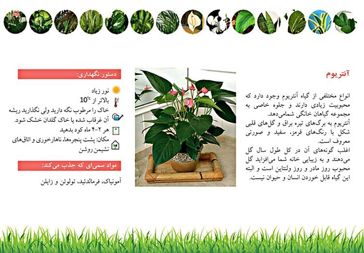 گیاهان چگونه هوا را پاک میکنند