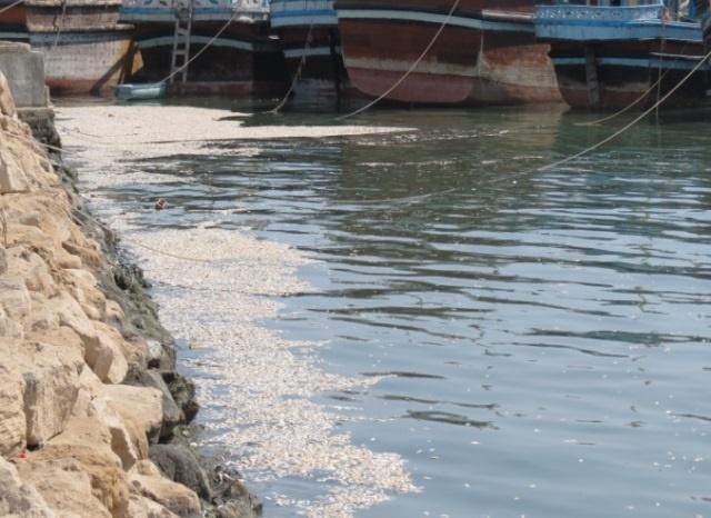 آلودگی نفتی در مرگ ماهیان کیش نقشی ندارد