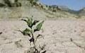 اجلاس بینالمللی خشکسالی در ایران برگزار میشود