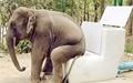 توالتهای پیشرفته باغوحش دیترویت