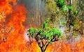 جنگلهای بهشهر بار دیگر شعله ور شد