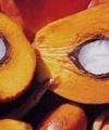 انتقاد از تخلف در واردات ۶۸هزار تن روغن پالم