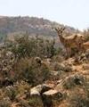 پارک ملی بمو به نفت آلوده میشود