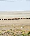 دریاچه ارومیه؛ هر روز دریغ از دیروز
