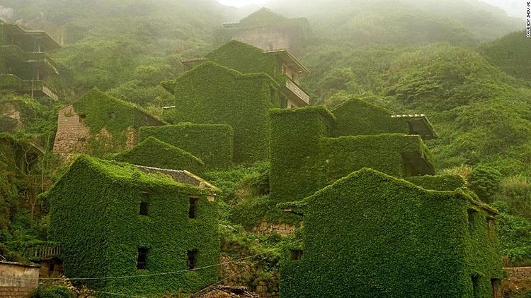 تصاویر پیچکهایی که یک روستا را بلعیدند