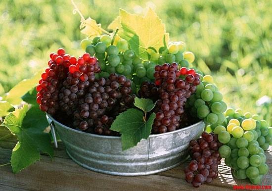 تضمین سلامتی پانکراس با این مواد غذایی