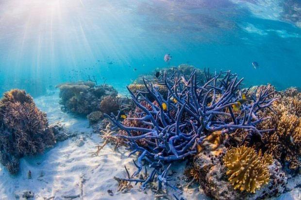 کشف مرجانهای مقاوم در برابر افزایش دمای آب اقیانوسها