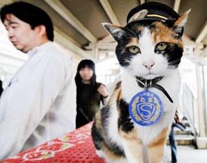 مرگ گربهای که ۸ سال رئیس ایستگاه قطار بود