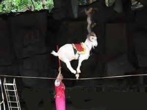 حیوانات وحشی از سیرکها حذف میشوند