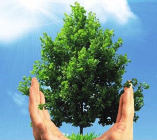 هفته محیطزیست وتخریب جنگلهای گیلان