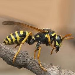 آلومینیوم؛ تهدید جدید جمعیت زنبورها