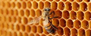 افتتاح بزرگراهی مخصوص زنبورها