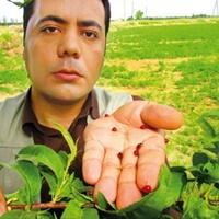 مردی که روش های بیولوژیک را جایگزین سم های شیمیایی میکند - محمد آروین - www.Etale.ir
