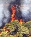 آتش در جنگلهای مازندران