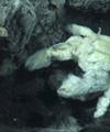 خرچنگی که کشاورزی میکند